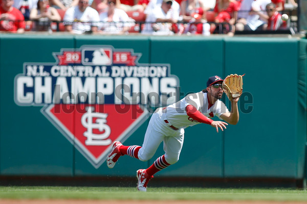17 APR 2016: St. Louis Cardinals center fielder Randal Grichuk (15) makes a diving catch during a baseball game against the Cincinnati Reds at Busch Stadium in St. Louis Missouri. The Cardinals won 4-3. (Photo by Scott Kane/Icon Sportswire)